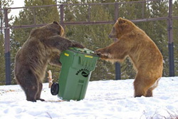 Best Bear Resistant Food Container