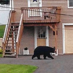 How To Bear Proof Your Home