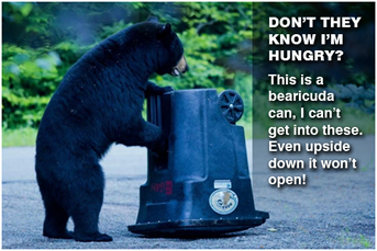 Bear tips Can