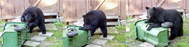 Bear Proof Containers Called The BEARicuda™ Garbage Can